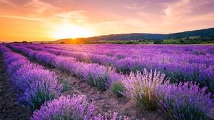 Field Summer Sky Sunset Flower 5554x3708 Wallpaper
