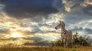 Wildlife 3840x2160 wallpaper