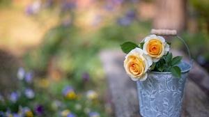 Rose 3840x2560 wallpaper