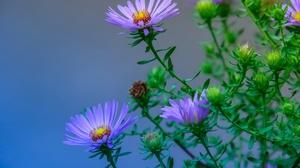 Blue Flower Bud Macro 2048x1280 Wallpaper