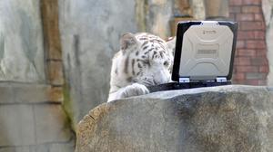 Notebook Panasonic Toughbook Tiger Toughbook 2583x1720 Wallpaper