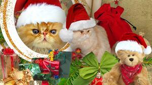Cat Christmas Decoration Gift Persian Cat Pet Santa Hat Teddy Bear 1920x1080 Wallpaper