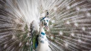Bird Feather Peacock Wildlife 2560x1707 wallpaper