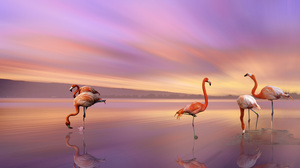 Animal Beach Bird Flamingo Reflection Sunset 3840x2160 wallpaper