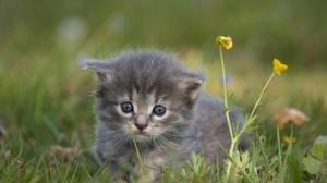 Pet Kitten Baby Animal 1920x1282 Wallpaper