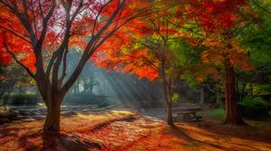 Artistic Tree 3840x2160 wallpaper