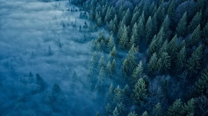 Aerial Fog Forest Nature 2000x1500 wallpaper
