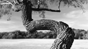 Nature Tree Bark Monochrome Outdoors Landscape Contrast Photography Trees 6016x4016 Wallpaper