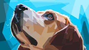 Dog 5000x3000 Wallpaper