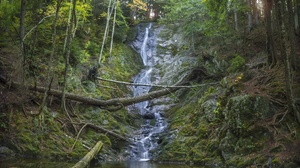 Nature Stream Log Forest Rock 2048x1385 Wallpaper