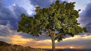 Earth Tree 2048x1340 Wallpaper