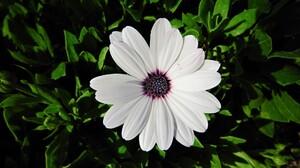 Daisy Earth Flower White Flower 1920x1040 Wallpaper