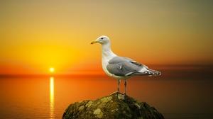 Bird Seagull Sunset Wildlife 1920x1080 wallpaper