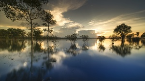 Nature Reflection Tree 5120x3200 Wallpaper