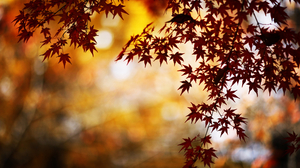 Fall Leaf Season 4500x2813 Wallpaper