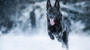 Dog German Shepherd Snowfall Winter 2048x1365 Wallpaper