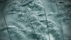 Blur Macro Plant 2048x1366 Wallpaper