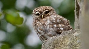 Bird Owl Wildlife 2880x1620 Wallpaper