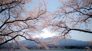 Mount Fuji Spring Sakura Japan 2300x1360 Wallpaper