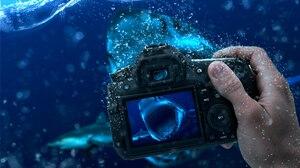 Underwater Shark Hand Manipulation 1920x1080 Wallpaper