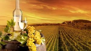 Bottle Grapes Still Life Vineyard Wine 5616x3744 Wallpaper