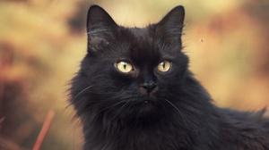 Cat Pet 3000x2030 Wallpaper