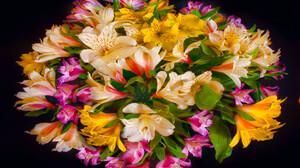 Earth Flower 1920x1300 wallpaper