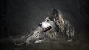 Pet 2560x1709 wallpaper