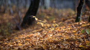 Fall Foliage Sprout 3840x2160 Wallpaper