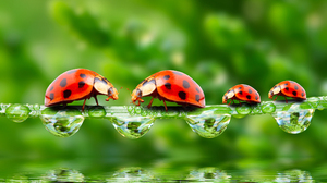 Insect Ladybug Macro Reflection Water Water Drop 2200x1942 Wallpaper