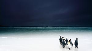 Beach Horizon Ocean Penguin Wildlife 2048x1365 Wallpaper