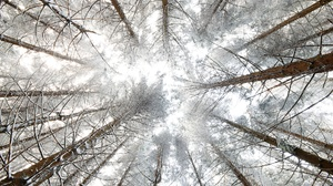 Canopy Nature Tree Winter 2000x1333 Wallpaper