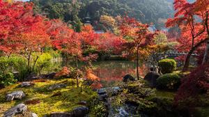 Fall Foliage Garden Japanese Garden Nature Pond 4200x2800 Wallpaper