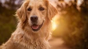 Dog Pet Depth Of Field 2048x1463 Wallpaper