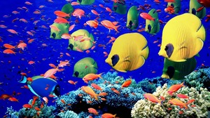 Animal Butterflyfish Colorful Colors Fish Tropical Underwater 1920x1080 Wallpaper