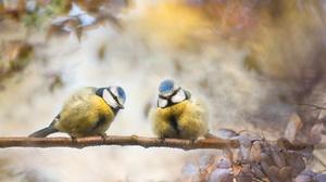 Bird Passerine Titmouse Wildlife 2048x1365 wallpaper