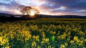 Field Flower Landscape Nature Scenic Sunset 1920x1200 Wallpaper