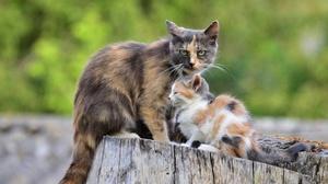 Baby Animal Cat Kitten Pet 2560x1696 wallpaper