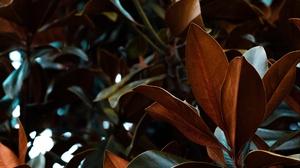 Fall Macro Nature 2560x1600 Wallpaper