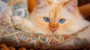 Cat Pet 5000x4000 Wallpaper