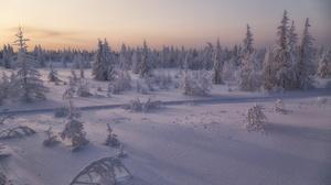Snow Fir Tree 2000x1333 Wallpaper