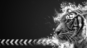 Animal Tiger 2560x1600 Wallpaper