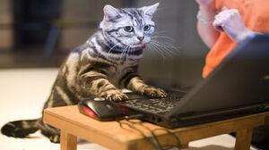 Cat Computer Cute Funny 1920x1200 Wallpaper