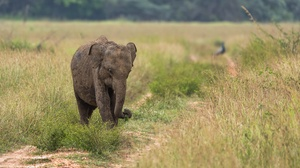 Baby Animal Elephant 3840x2160 wallpaper