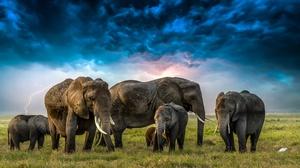 Baby Animal Cloud Elephant 5472x3078 Wallpaper