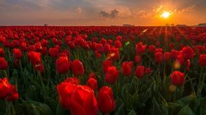 Nature Flower Red Flower Sunrise 2048x1256 Wallpaper