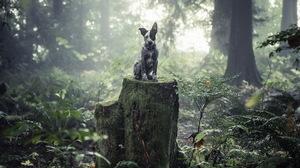 Dog Puppy Cute Australia Forest Tree Stump Moss Australian Pet Fog 2048x1303 Wallpaper