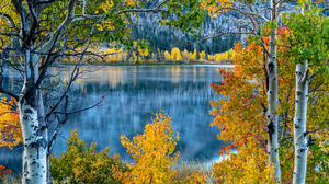 Birch Fall Foliage Lake Mountain Tree 4690x3000 wallpaper