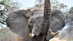 Elephant Wildlife 5518x4000 Wallpaper