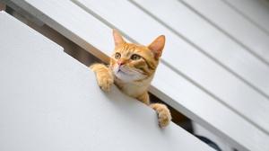 Cats Feline Animals Pawns 2048x1366 Wallpaper